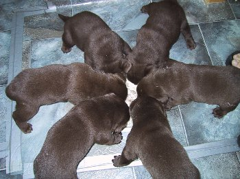 w4   pups eating